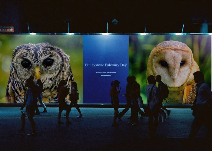owls advert